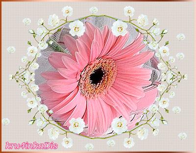 Розовая-гербера (400x312, 257Kb)