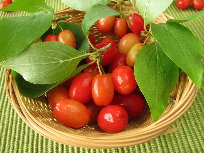 ягоды кизила польза 2 (700x525, 456Kb)