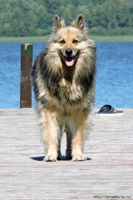 собака (466x700, 251Kb)