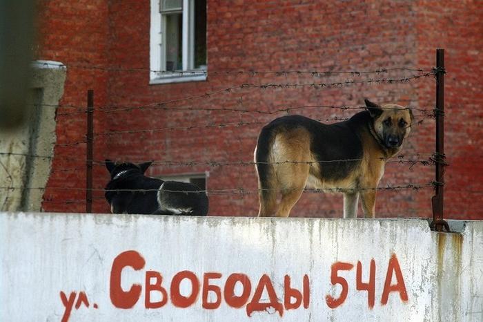 фото-живность-собакен-свобода-1678220 (700x466, 249Kb)