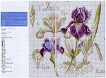 Превью Iris-2 (700x514, 413Kb)