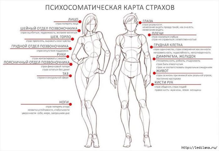 3925311_telesnaya_karta_strahov (700x483, 151Kb)