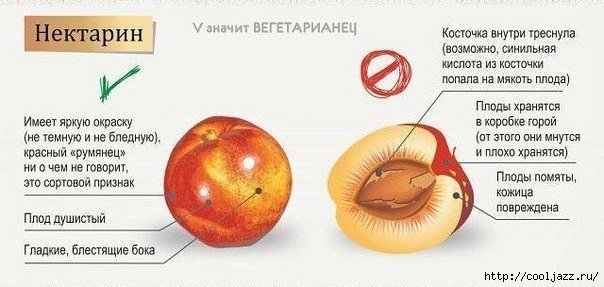 как выбираь овощи и фрукты3 (604x287, 107Kb)