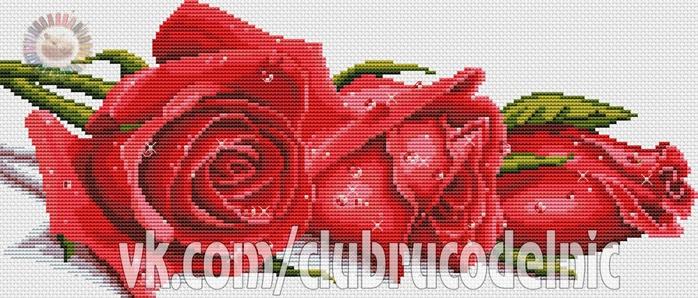 5630023_Krasnie_rozi (700x298, 212Kb)