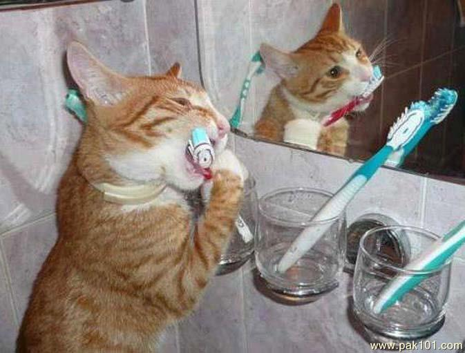 cat_toothbrush_gwmpw_Pak101(dot)com (673x511, 48Kb)