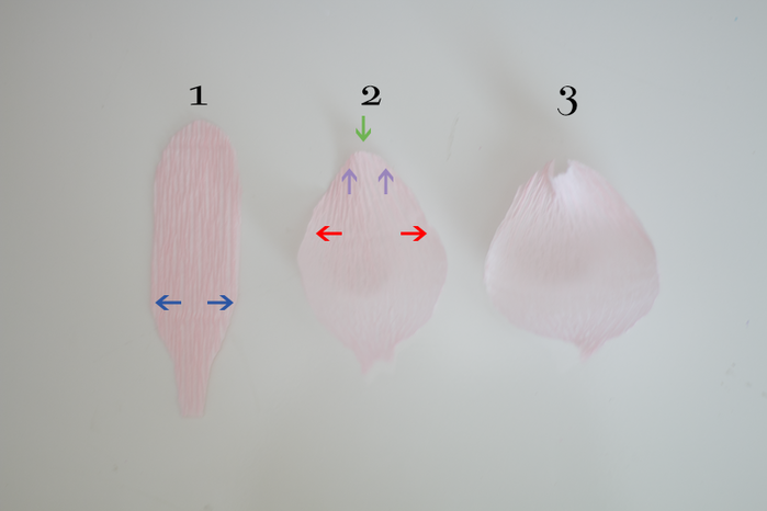 Создаем ПИОНЫ из гофрированной бумаги (4) (700x466, 224Kb)