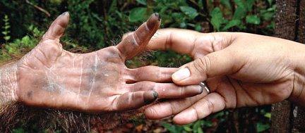 hands (432x189, 91Kb)