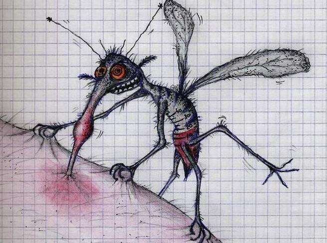 Простое домашнее средство от комаров/1783336_6128 (655x488, 114Kb)