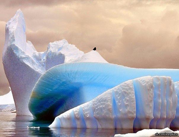 Ледник Плено (604x463, 207Kb)