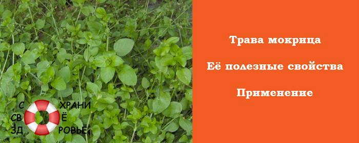 mokrica-foto (700x280, 185Kb)