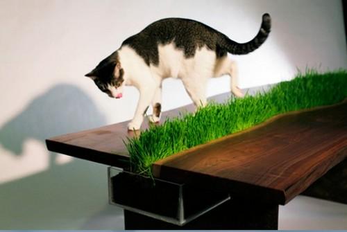 столик для кошки (500x335, 33Kb)