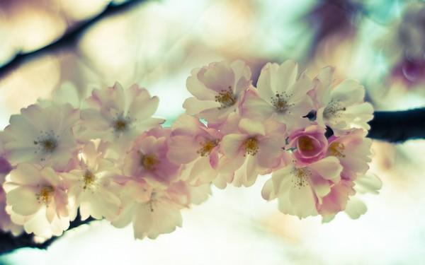 Фотографируем весенние цветы - советы и примеры 4 (600x375, 51Kb)