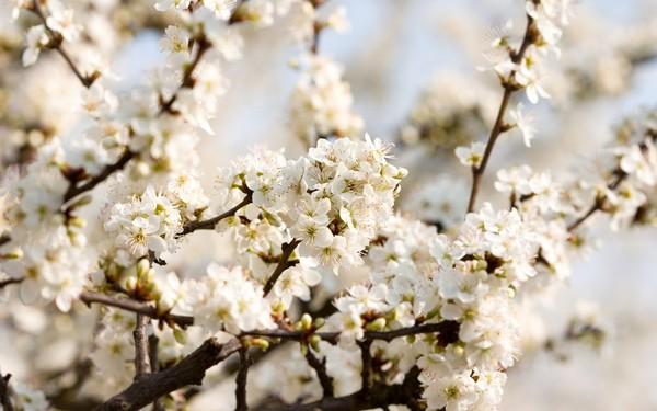 Фотографируем весенние цветы - советы и примеры 5 (600x375, 60Kb)