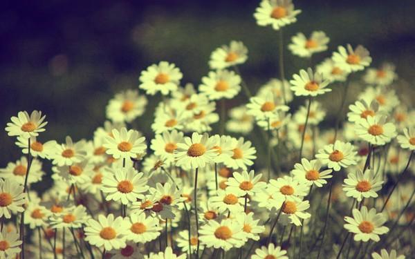 Фотографируем весенние цветы - советы и примеры 17 (600x375, 66Kb)