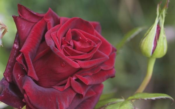 Фотографируем весенние цветы - советы и примеры 25 (600x375, 40Kb)
