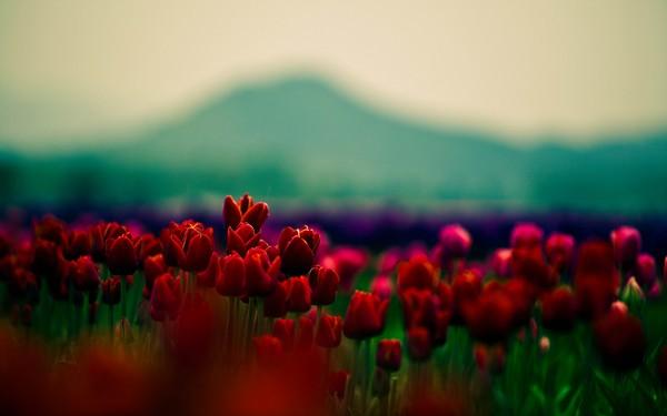 Фотографируем весенние цветы - советы и примеры 29 (600x375, 30Kb)