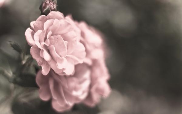 Фотографируем весенние цветы - советы и примеры 37 (600x375, 29Kb)