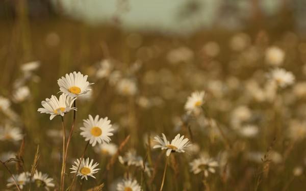 Фотографируем весенние цветы - советы и примеры 39 (600x375, 35Kb)