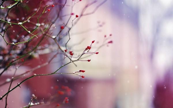 Фотографируем весенние цветы - советы и примеры 41 (600x375, 41Kb)
