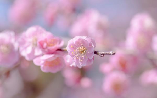Фотографируем весенние цветы - советы и примеры 49 (600x375, 25Kb)