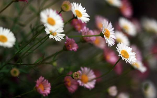 Фотографируем весенние цветы - советы и примеры 52 (600x375, 40Kb)