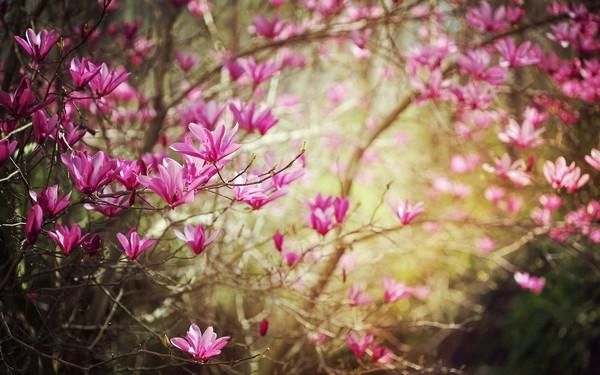 Фотографируем весенние цветы - советы и примеры 54 (600x375, 72Kb)