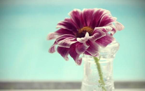 Фотографируем весенние цветы - советы и примеры 21 (600x375, 30Kb)