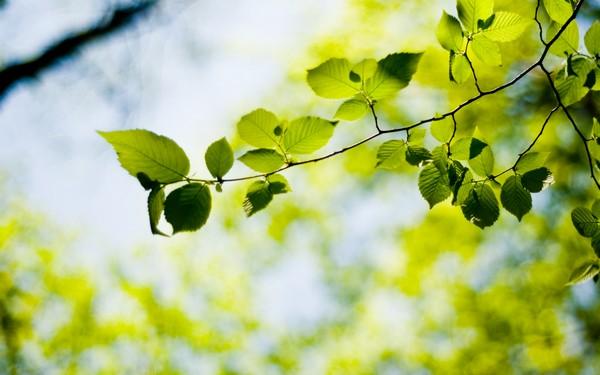 Фотографируем весенние цветы - советы и примеры 31 (600x375, 51Kb)
