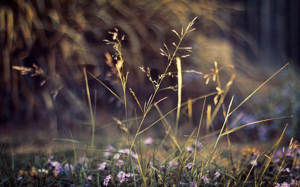 Фотографируем весенние цветы - советы и примеры 33 (600x375, 62Kb)