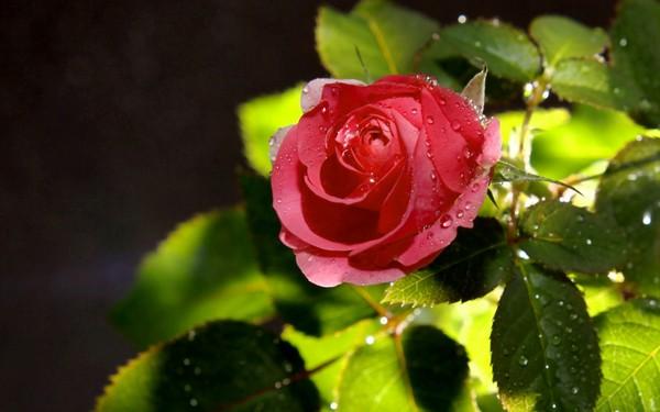 Фотографируем весенние цветы - советы и примеры 46 (600x375, 48Kb)