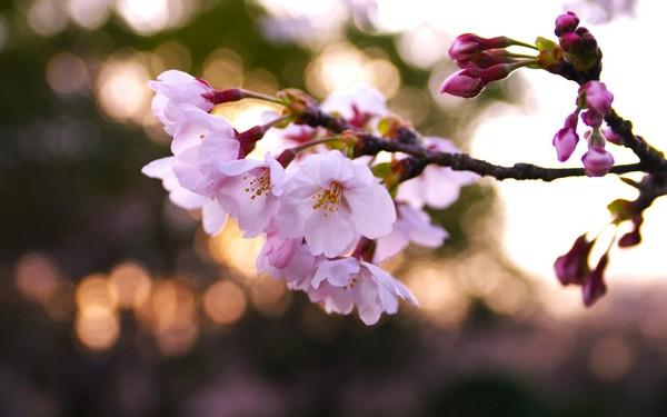 Фотографируем весенние цветы - советы и примеры 48 (600x375, 44Kb)