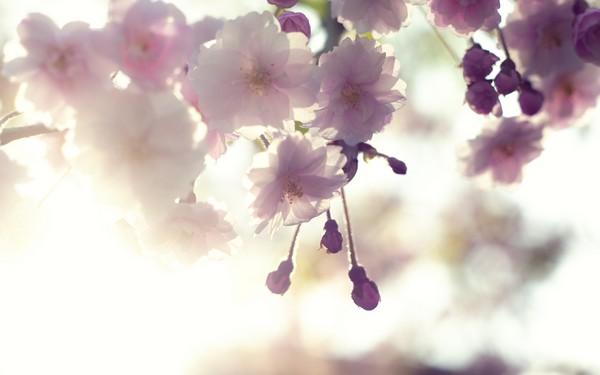 Фотографируем весенние цветы - советы и примеры 56 (600x375, 33Kb)
