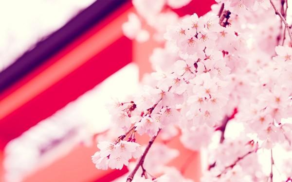 Фотографируем весенние цветы - советы и примеры 57 (600x375, 45Kb)