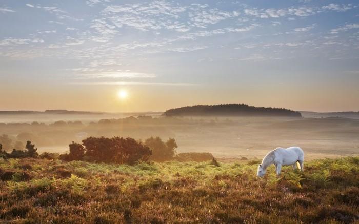 белая лошадь (700x437, 71Kb)