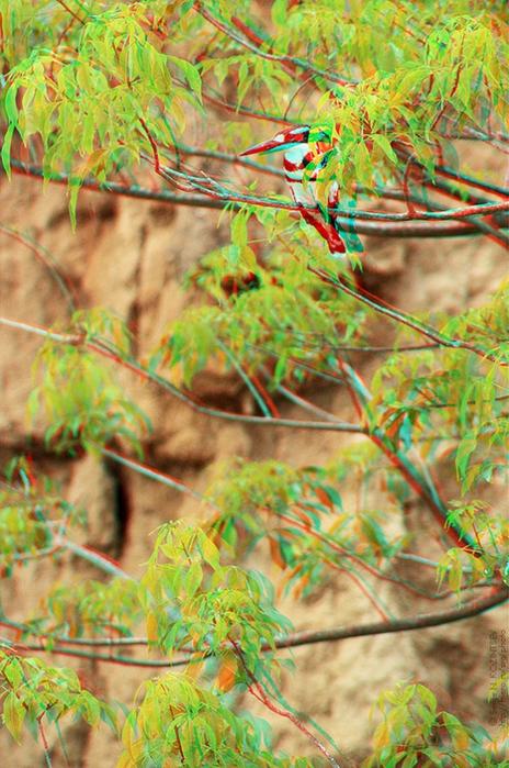 Красивые пейзажи - стерео картинки анаглиф 61 (464x700, 500Kb)