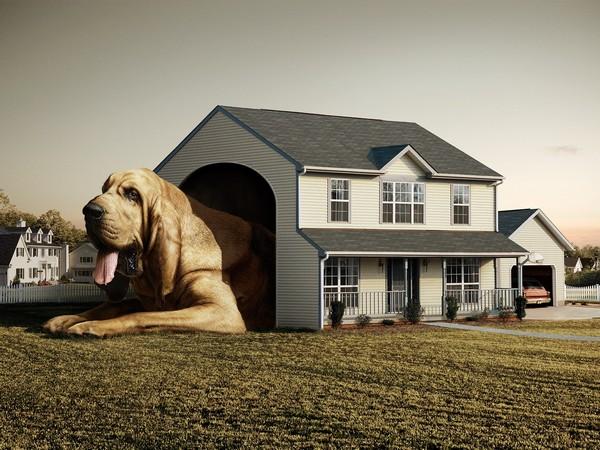 Снимаем портретное фото животных - собаки 3 (600x450, 89Kb)