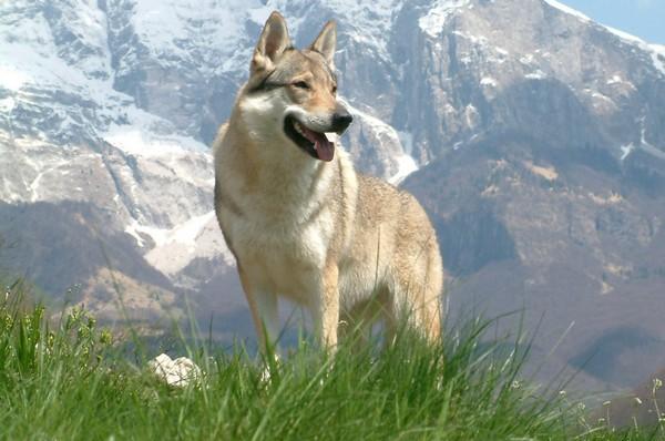 Снимаем портретное фото животных - собаки 7 (600x398, 73Kb)