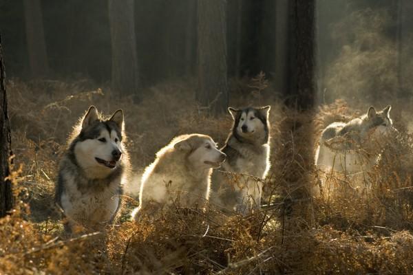 Снимаем портретное фото животных - собаки 15 (600x400, 66Kb)