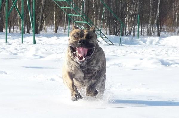 Снимаем портретное фото животных - собаки 17 (600x398, 66Kb)