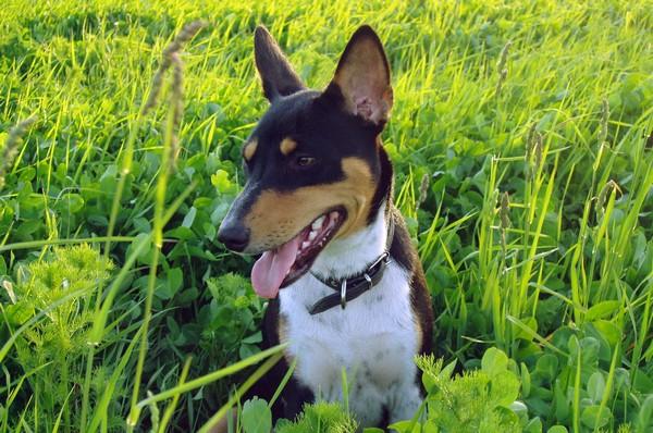Снимаем портретное фото животных - собаки 21 (600x398, 105Kb)