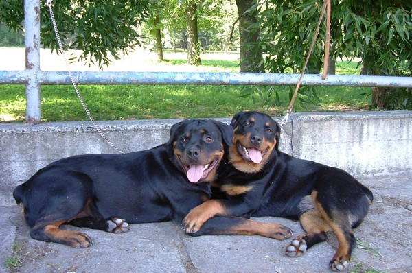 Снимаем портретное фото животных - собаки 28 (600x398, 106Kb)