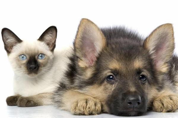 Снимаем портретное фото животных - собаки 38 (600x398, 56Kb)