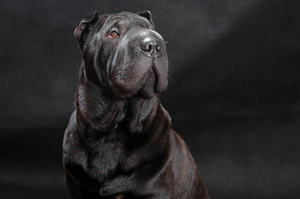 Снимаем портретное фото животных - собаки 40 (600x398, 47Kb)