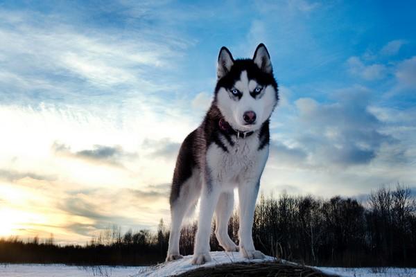 Снимаем портретное фото животных - собаки 46 (600x400, 52Kb)