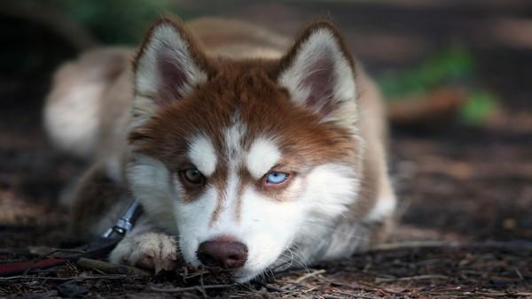 Снимаем портретное фото животных - собаки 51 (600x338, 41Kb)