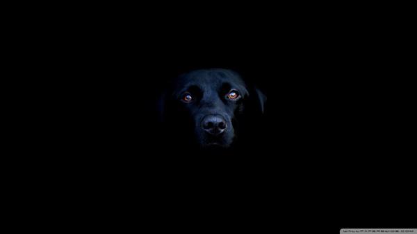 Снимаем портретное фото животных - собаки 53 (600x338, 5Kb)