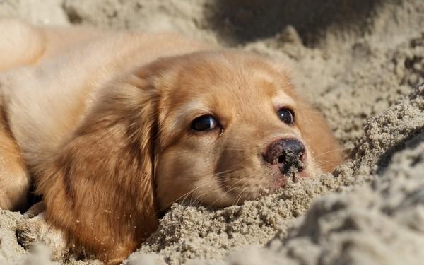 Снимаем портретное фото животных - собаки 55 (600x375, 62Kb)
