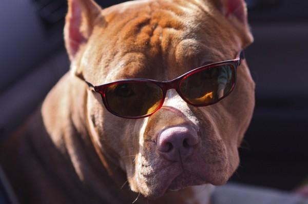 Снимаем портретное фото животных - собаки 66 (600x398, 47Kb)