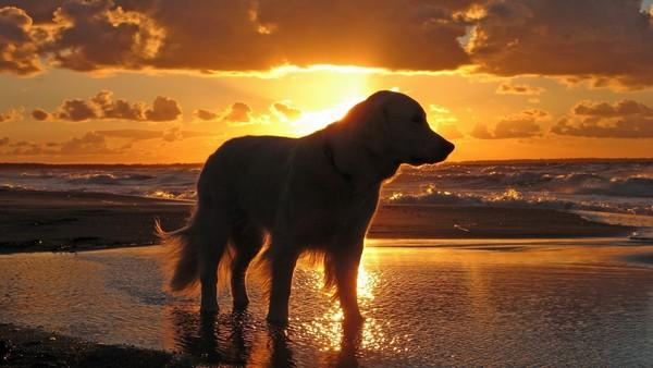 Снимаем портретное фото животных - собаки 68 (600x338, 55Kb)