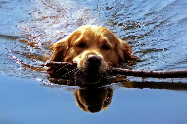 Снимаем портретное фото животных - собаки 74 (600x400, 80Kb)